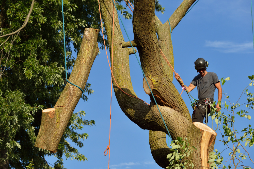 Do you need to have a tree removed?